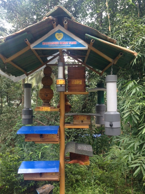 Stingless Bee Keeping (meliponiculture) - MADHUSREE HONEY
